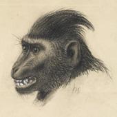Joseph Wolf (1820–1899)